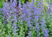 10 Hard Working Perennials for Mountain Gardens