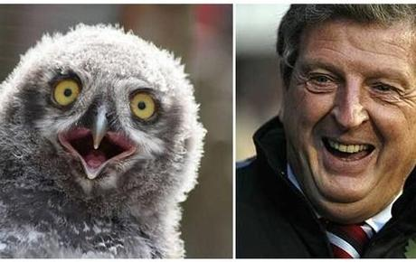 Roy Hodgson: The first owl look-a-like to manage the England football team