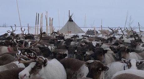 The Nenets Of Siberia