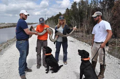 Dogs Sniff Out Snakes Rather than Bombs