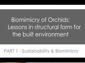 Biomimicry Orchids