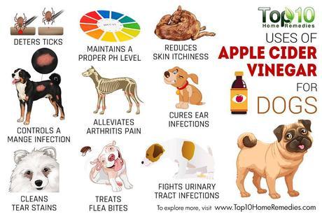 10 Surprising Usages of Apple Cider Vinegar for Dogs - Paperblog