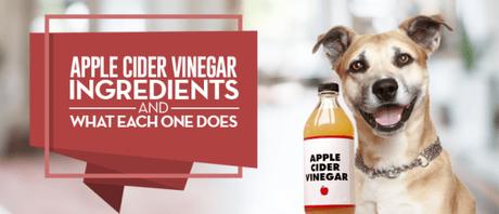 10 Surprising Usages of Apple Cider Vinegar for Dogs