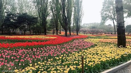 Stunning Places to Visit In Beijing botanical garden