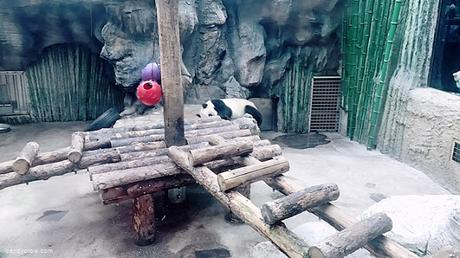 Stunning Places to Visit In Beijing zoo