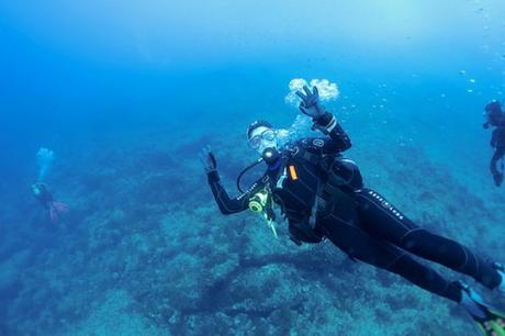 3 Best Dive Sites in the Puget Sound