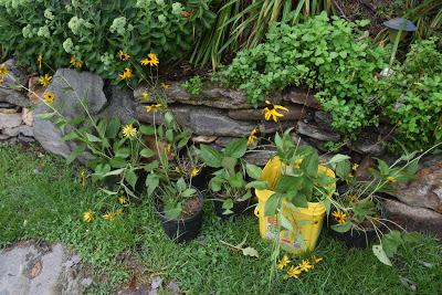 Gardening in the Time of Rain