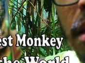 Philippine Tarsier Sanctuary Corella Bohol Witness Smallest Monkey World?