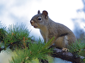 Squirrel Hunting Tips Become Amazing Hunter