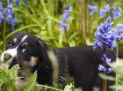 Common Plants That Poisonous Cats Dogs