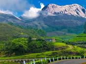 Kurinji Flowers Southern Valley Nilgiri Hills