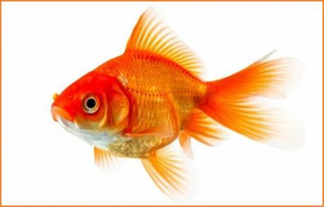 Einstein's Goldfish...