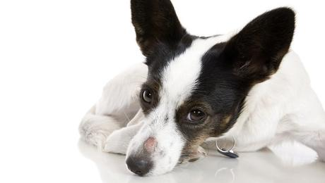 Common Causes, Symptoms and Treatments for Dog Hair Loss