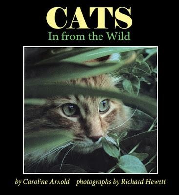 CATS: In from the Wild now Available as an e-Book