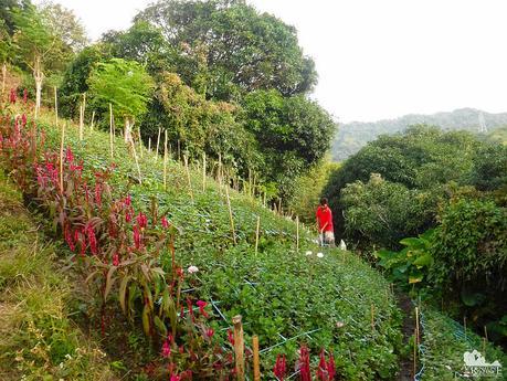 Flower farm in Napo
