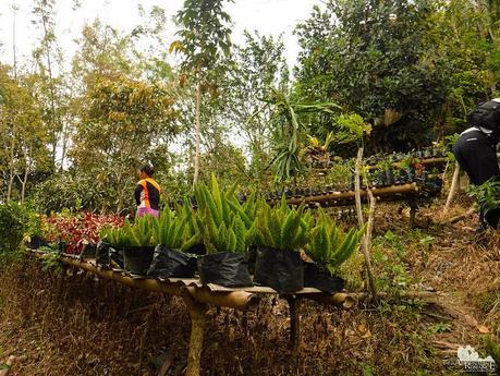 Farm for ornamental plants