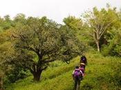 Manggapares Trail: Practice Climb Closed Sale
