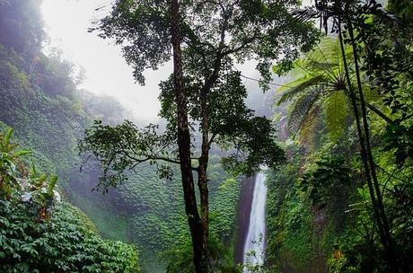 waterfall-rainforest-forest-nature-