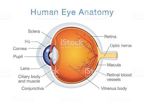Myopia eye