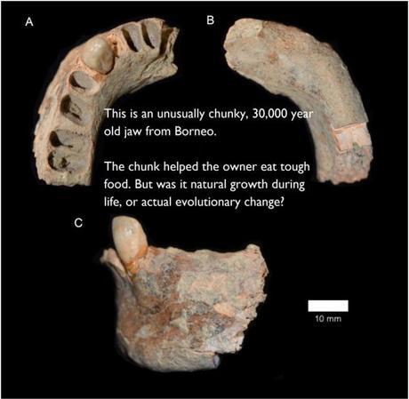 Neanderthal hybrids – Human evolution news update #13