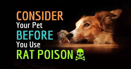 How to Prevent Dog Poisoning, What to Avoid, Improve Your Dog's Diet
