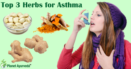 Top 3 Herbs that Helps to Manage Asthma Naturally