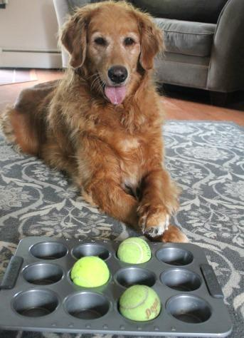 Rainy Day Activities for your Senior Dog