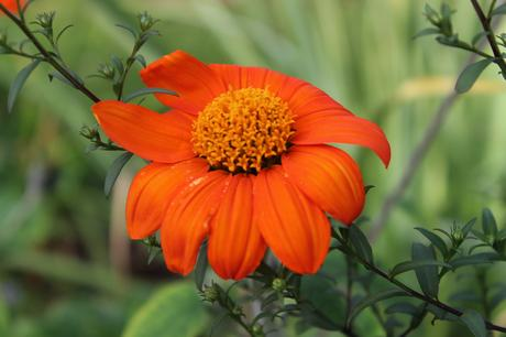 Garden Bloggers Bloom Day – Sept 2018