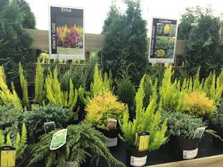 glee 2018 - gardening products to look out for in the coming year