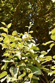 Tree-following -September 2018