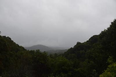 The Joy of a Gentle Rain. . .