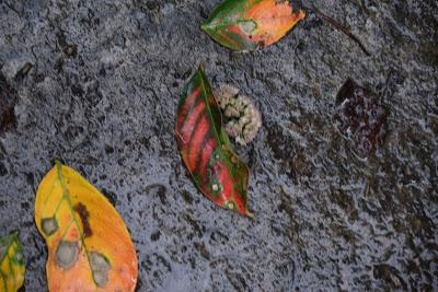 Intimations of Autumn