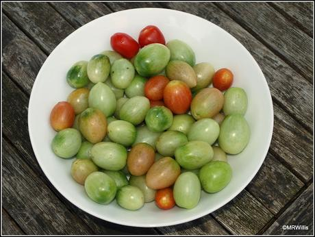 End of the line for the Cherry Tomatoes