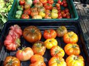 Line Cherry Tomatoes