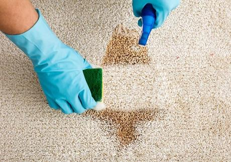 What Should You Expect from a Professional Carpet Cleaning Service