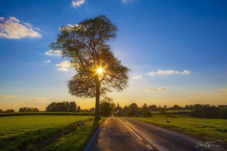 The gift of Life Le don de la Vie New photo Nouvelle photo Visit: www.benheine.com #tree #arbre #sunset #coucherdesoleil #benheinephotograhy #sky #nature #free #freedom #gift #don #landscape #rochefort #provincedenamur