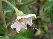 Doing Help Bees