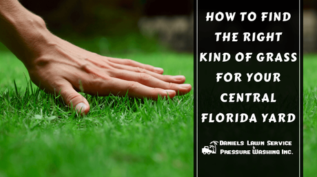 How to Find the Right Kind of Grass for Your Central Florida Yard