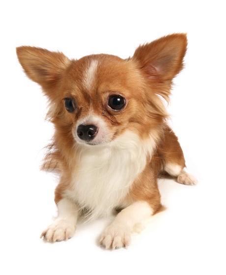 Keeping a dog as a pet