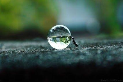 I Wonder What Ants do on Rainy Days…