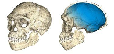 Where did modern humans evolve? It's complicated