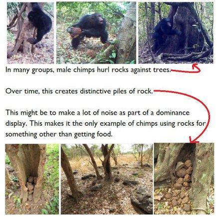 Chimps like it loud – Human evolution news update 14