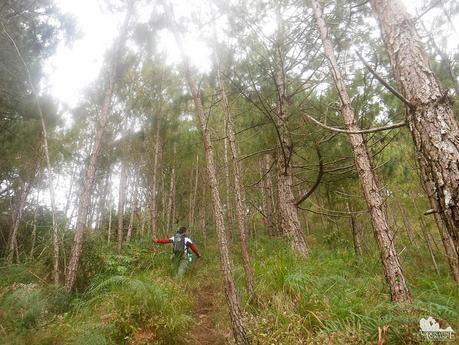 Final assault up the pine forest