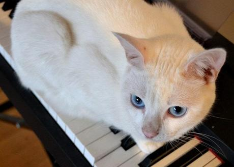 How do you know if your cat is deaf? Understanding feline deafness