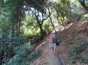 SHADY HIKE JOAQUIN MILLER PARK Francisco's East