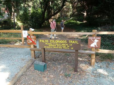 SHADY HIKE in JOAQUIN MILLER PARK in San Francisco's East Bay