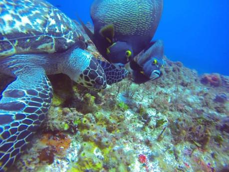 The Essential Cozumel Travel Guide