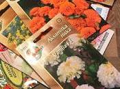 Product Feature: Marigolds from Garden Seeds Market