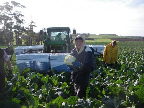 Top Tips for Working on a Farm while Travelling
