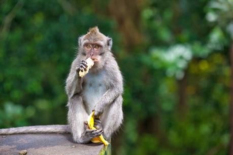 Melbourne Zoo stops feeding its animals fruit
